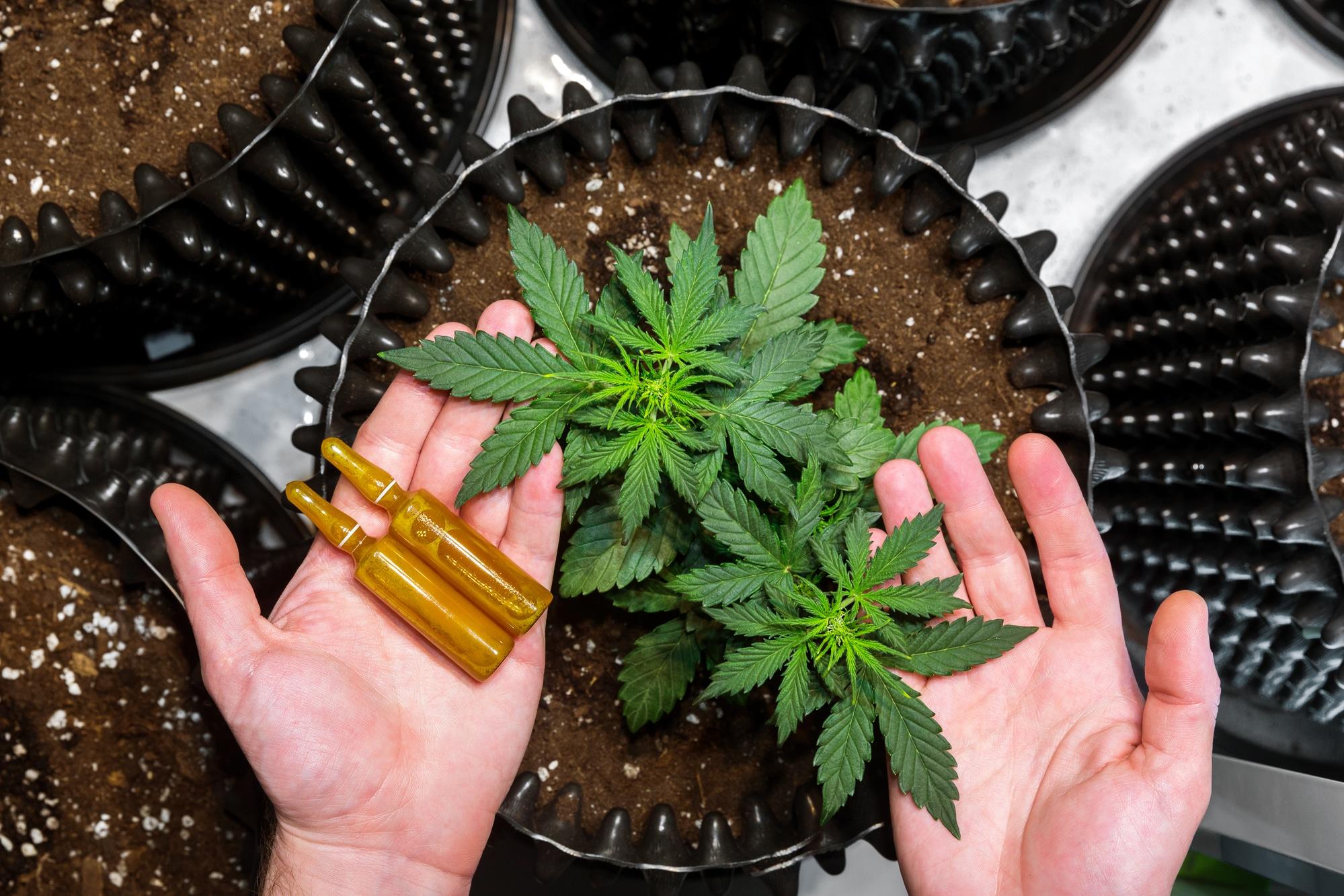 does cbd oil show up on a drug test uk
